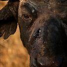 Scar by Leon Rossouw