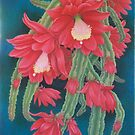 Red Cactus by JANET SUMMERS