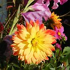 Sunshine Dahlia by Kathryn Jones