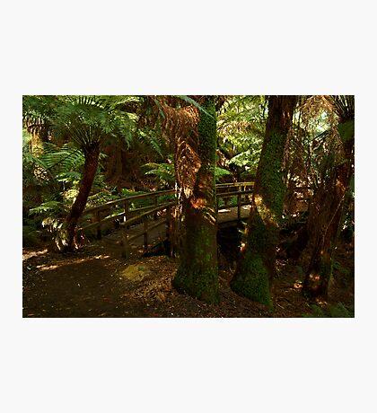 Maits Rest,Otway Ranges Photographic Print
