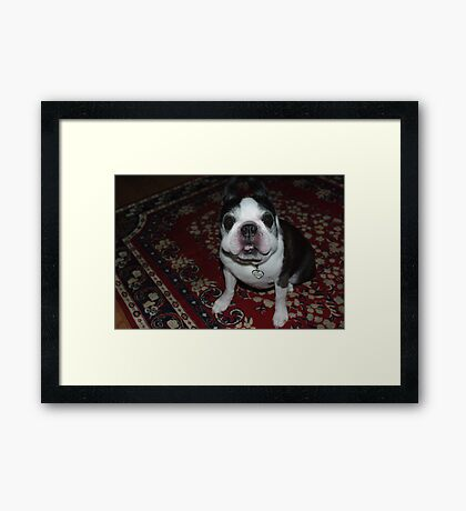 """Seriously, does my face look funny to you""? Framed Print"