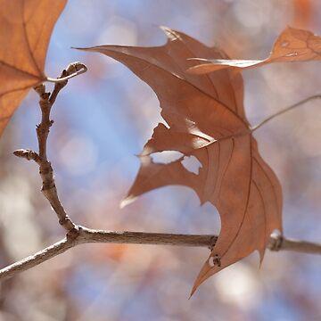 Fall colours by Shendz