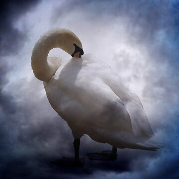swan and clouds by issabild