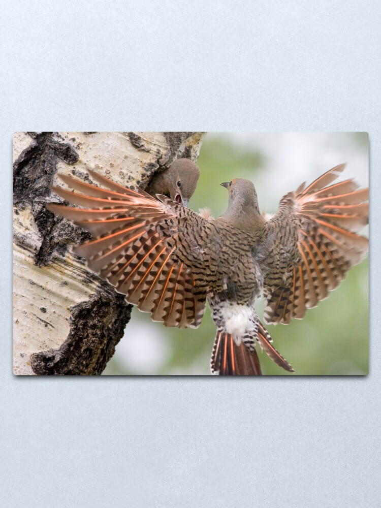 Alternate view of Flicker Breakfast On The Way, with Flare Metal Print