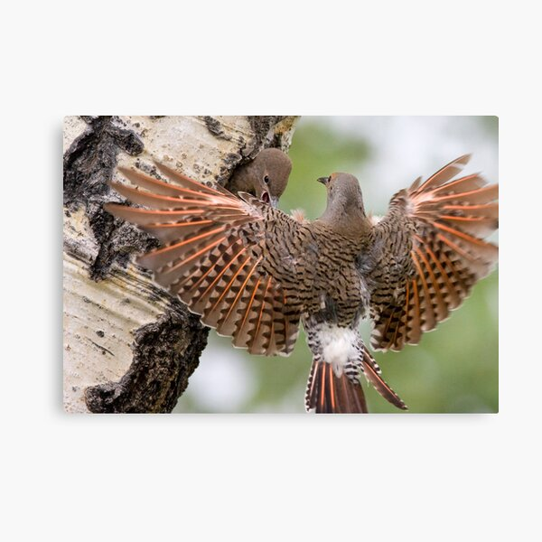 Flicker Breakfast On The Way, with Flare Canvas Print