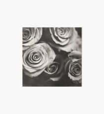 Medium format analog black and white photo of white rose flowers Art Board