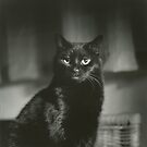 Portrait of black cat square black and white analogue medium format film Hasselblad  photograph by edwardolive