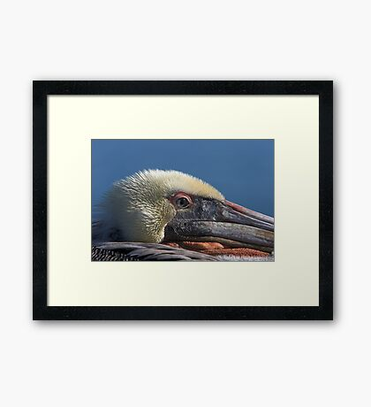 Keeping an Eye Out Framed Print