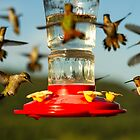 Hummers by Randy Turnbow