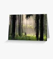 Enchanted Forest (Flathead National Forest, Montana, USA) Greeting Card