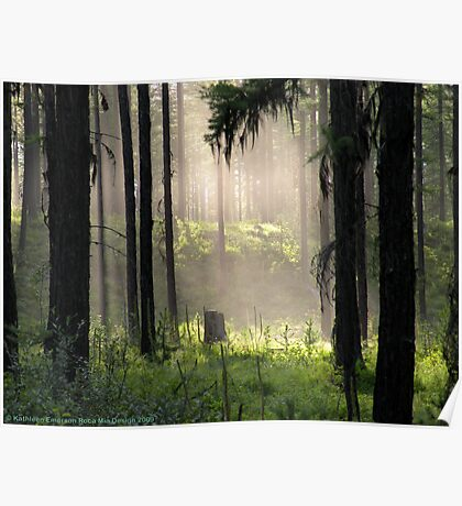 Enchanted Forest (Flathead National Forest, Montana, USA) Poster
