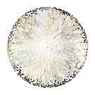 Dandelion Seed Head by Trevor Boyle