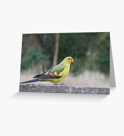 The Regent Parrot Greeting Card