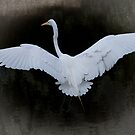 Egret Wing Span by gemlenz