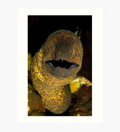 Yellow Edged Moray Art Print
