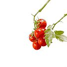 Red Cherry Tomatoes  by elenimac