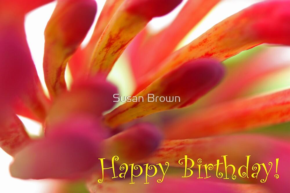 Happy Birthday - Firecracker Greeting Card by Susan Brown