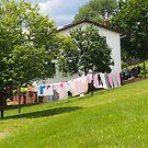Amish Washing Line, Ohio. by Billlee