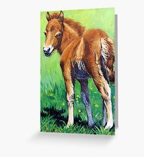 Foal. Greeting Card