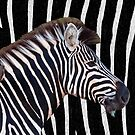 Zebra Camo by Seesee