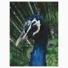 Peacock by LumixFZ28