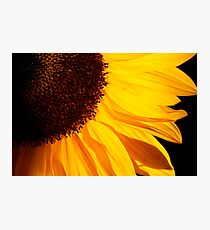 Sunbathe Photographic Print