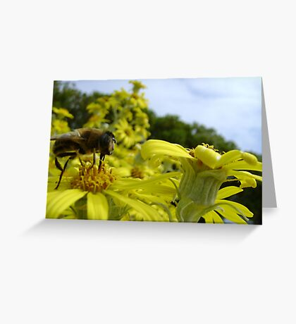 Bee's World - honeybee close-up, vista of flowers Greeting Card