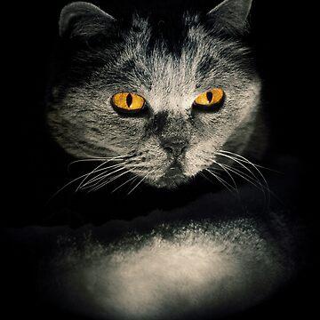 Dark Cat by PZAndrews