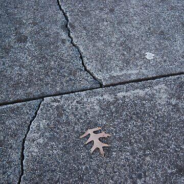 Leaf on Footpath by Gemma by xavier