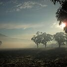 misty morning by shano