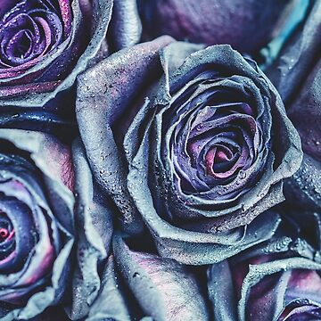 Macro photography of purple - neon roses with raindrops by Edalin