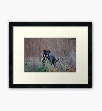 Gilly Framed Print