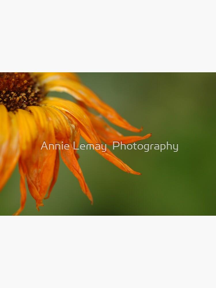 Last Dance by ajlphotography