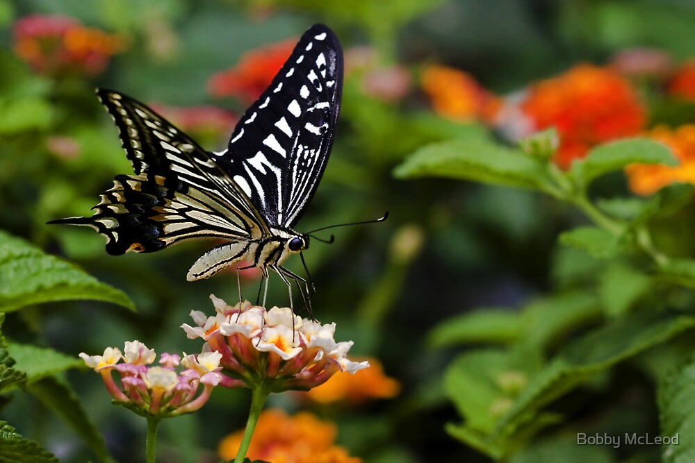 Sweet Nectar by Bobby McLeod