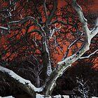 Red Night 2 by Manolya  Fumero
