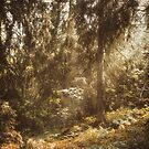 Vintage woods by Pascal Deckarm