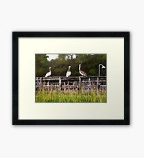 Pelican Point  /  South Carolina Framed Print