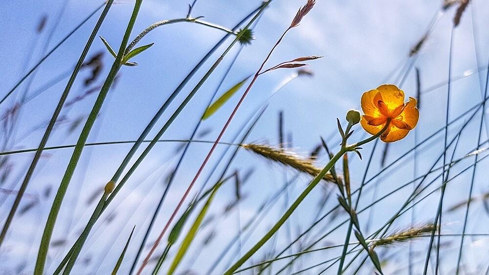 Summer Meadow by PhilMclean71