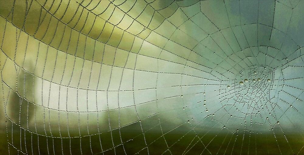 Cobwebs in the early morning mist by PhilMclean71