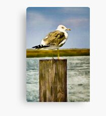 Seagull II  /  South Carolina Canvas Print