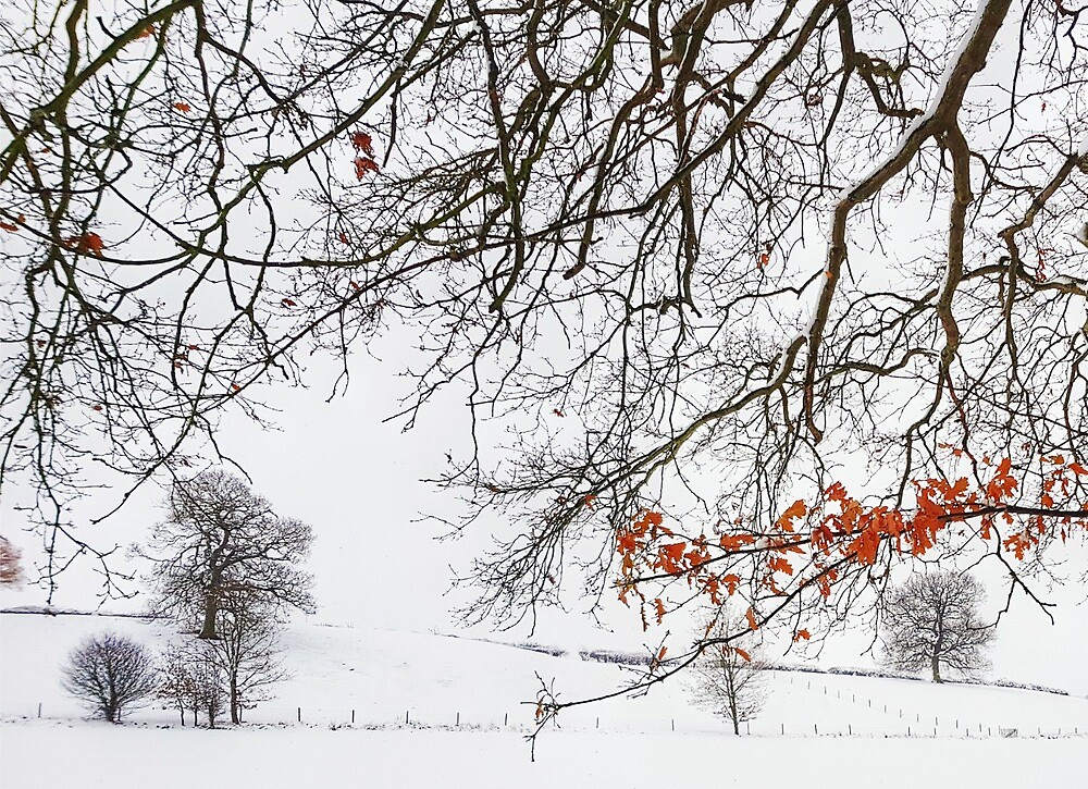 Winter colour by PhilMclean71