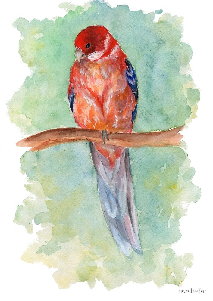 Parrot on the branch by noelle-far