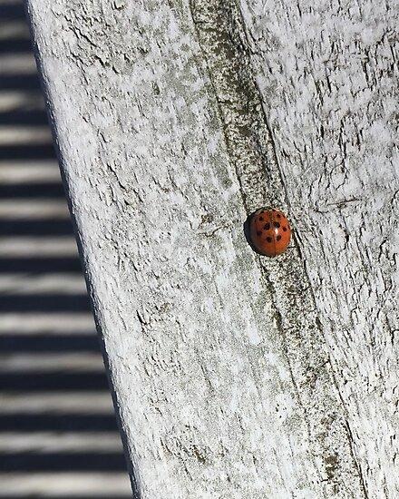 Ladybug by ShatterLens