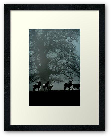 Deer in Mist by Martin Ingley