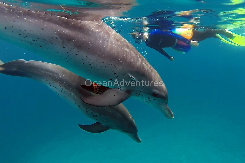 Atlantic spotted dolphins - play bandana game with mermaid Libby by OceanAdventures