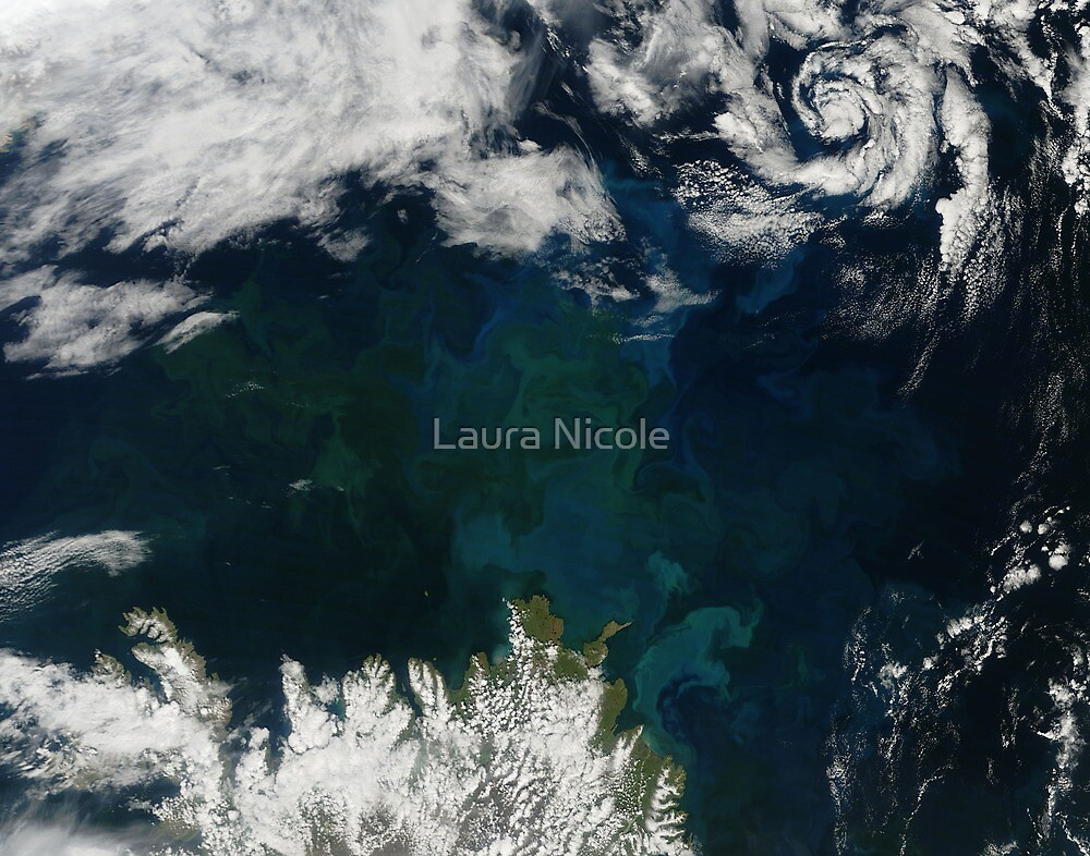 Phytoplankton Bloom, Iceland by Laura Nicole