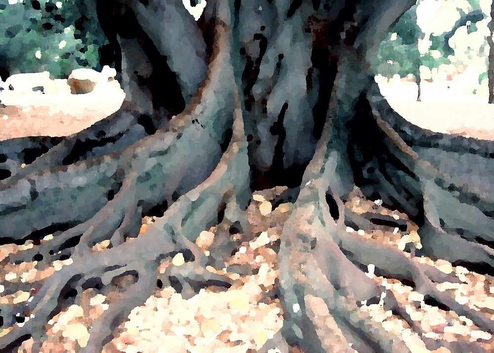 Moreton Bay Fig Tree Roots by Kylie Newton