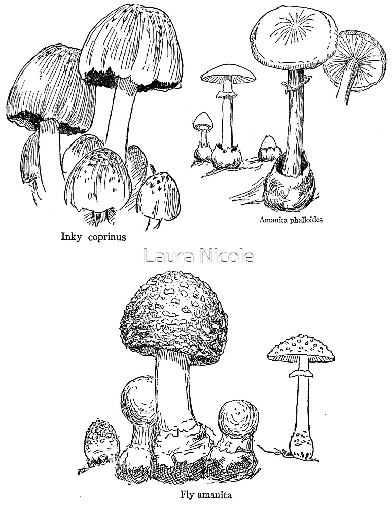 fun with mushrooms by Laura Nicole