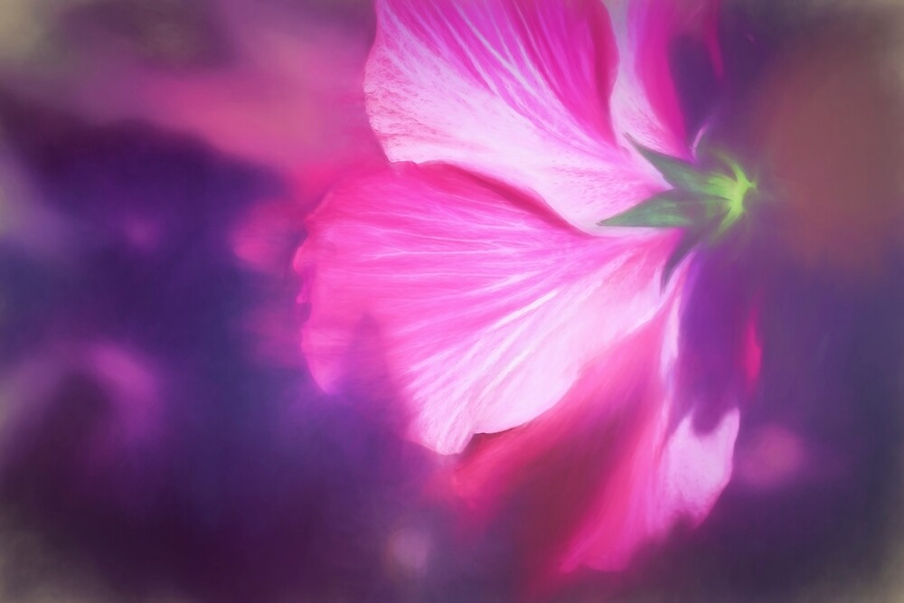 Hibiscus in the Light by Kay Brewer