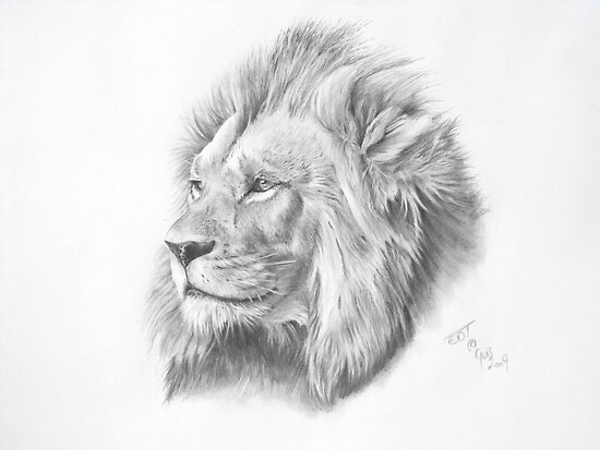 The lion posters by ed teasdale redbubble for Lupo disegno a matita
